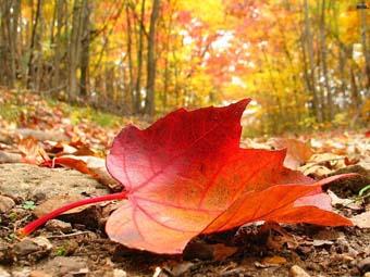 Медова осінь