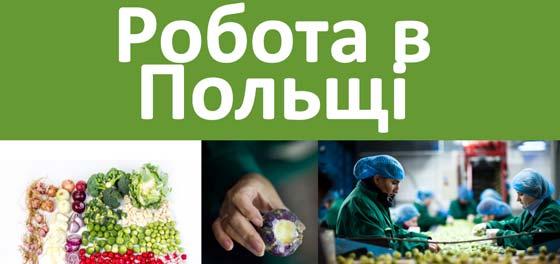 Робота в Польщі  faca33991f63d