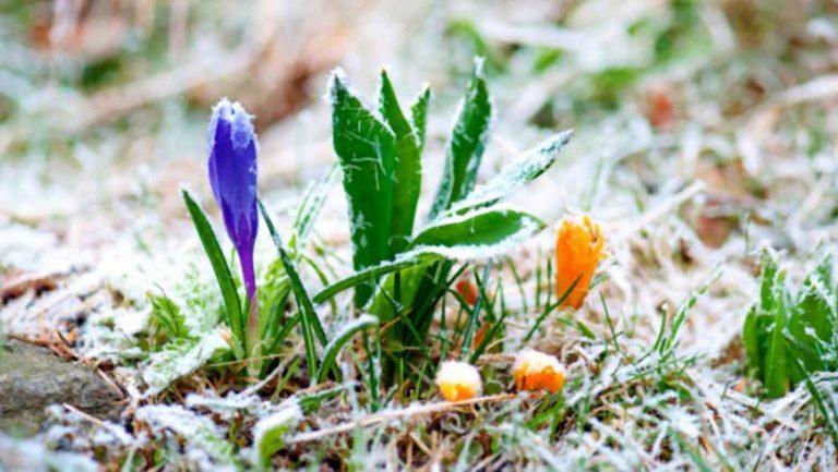 Погода: синоптики прогнозують морози