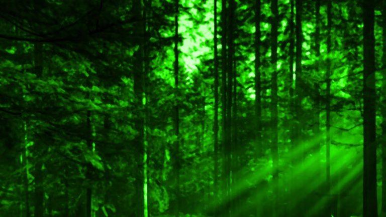 У Львівській облраді знову протягують надання мисливських угідь Медведчукові – ЗМІ