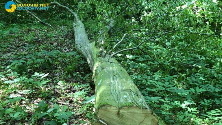 Тарас Батенко написав звернення щоб зупинити вирубку дерев біля с. Кругів