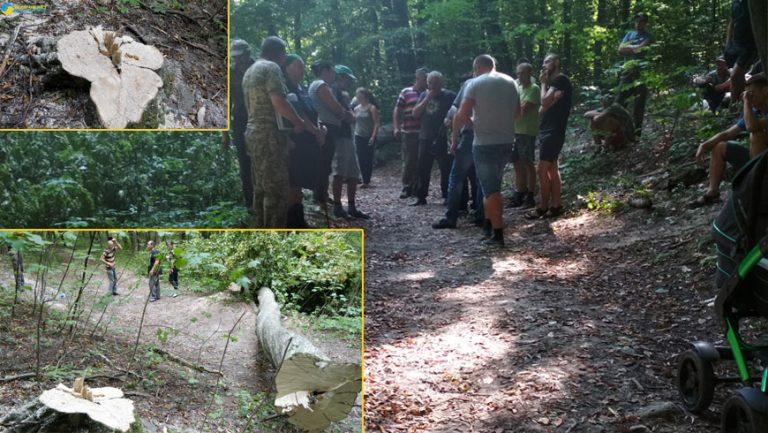Вільний мікрофон: у селі Кругів люди виступили проти вирубки лісу