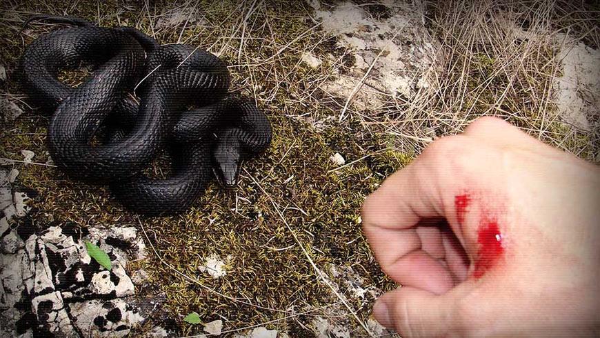 укус змії