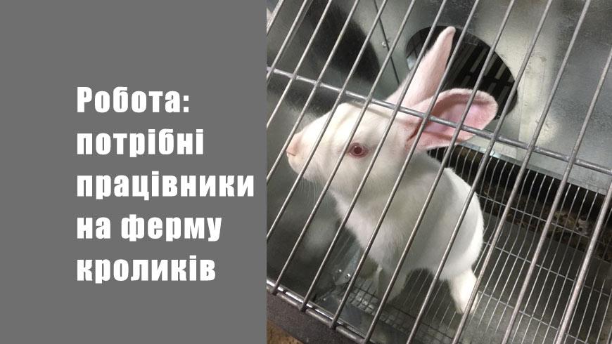 Робота: потрібні працівники на ферму кроликів