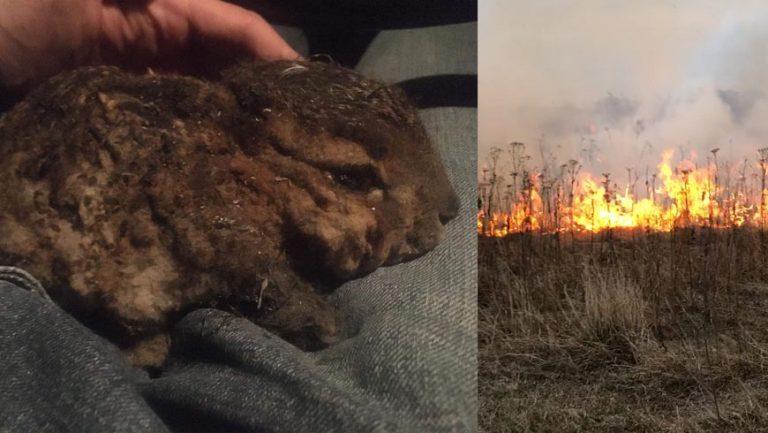 На Львівщині хочуть жорстко карати паліїв трави: найменший штраф –  42 тисячі грн
