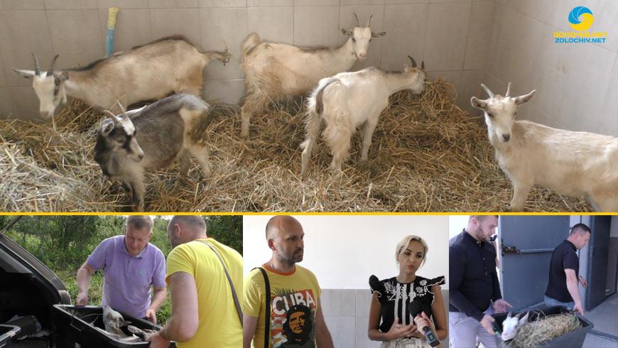 Фермер з Франківщини подарував кози на соціальне підприємство у Золочівському районі