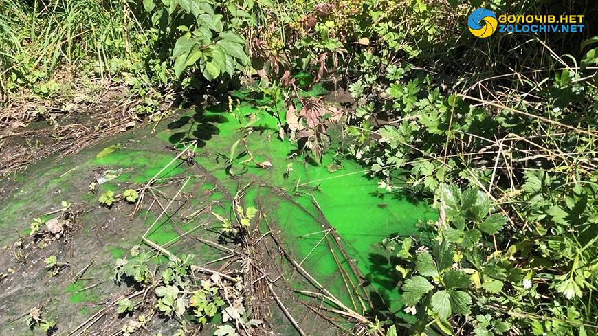 У Золочеві в парку біля Молодіжного озера тече зелена рідина (відео)