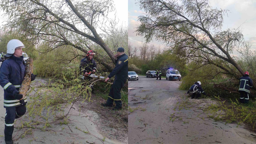поваленя дерева