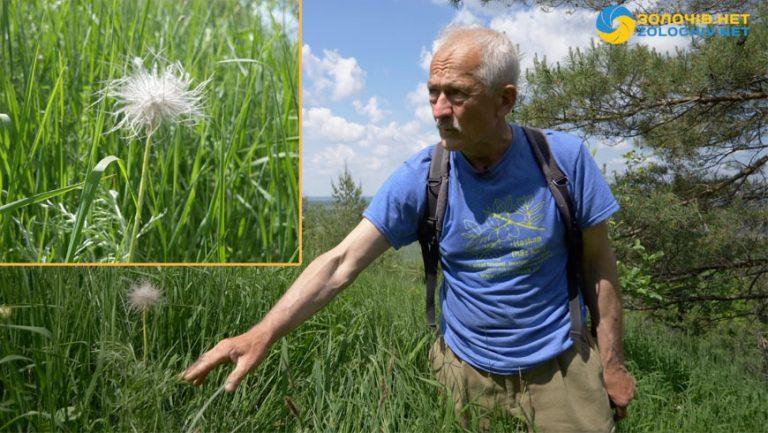 """Зелений туризм: Сон трава велика у НПП """"Північне поділля"""" (відео)"""