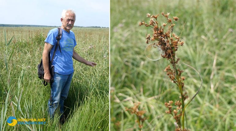 Меч-трава болотна    Зелений туризм (відео)